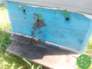 Пчёлы освоились