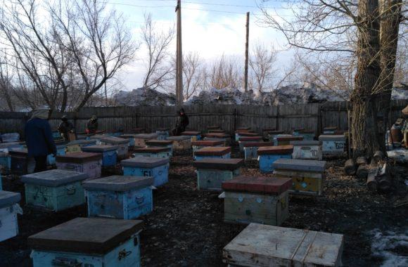 Пчёлы после зимовки